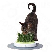 Catit Design Senses Gras Garden - kissanruohon uudelleentäyttöpussi (2 kpl à 70 g)