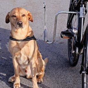 Dogman Polkupyörätalutin Koiralle