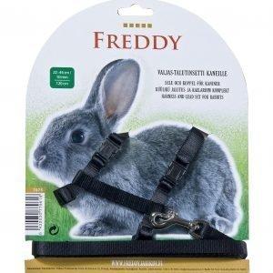 Freddy Valjas-/Talutinsetti Kanille Tai Marsulle