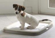 Harjoitusalusta Savic Puppy Trainer