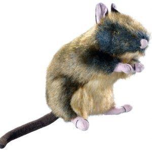 Hunter Wildlife Rat