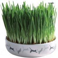 Keraaminen astia kissanruoholle - Ø 15 cm + 50 g siemeniä