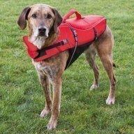 Koiran pelastusliivit (5 kokoa)