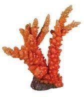 Korkea korallikoriste