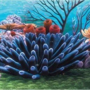 Penn Plax Akvariebakgrund Korallrev 51x31 Cm