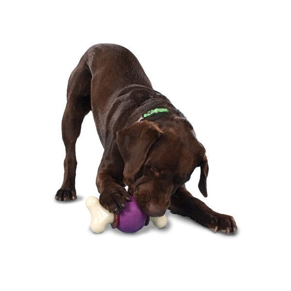 Petsafe Busybuddy Bouncy Bone