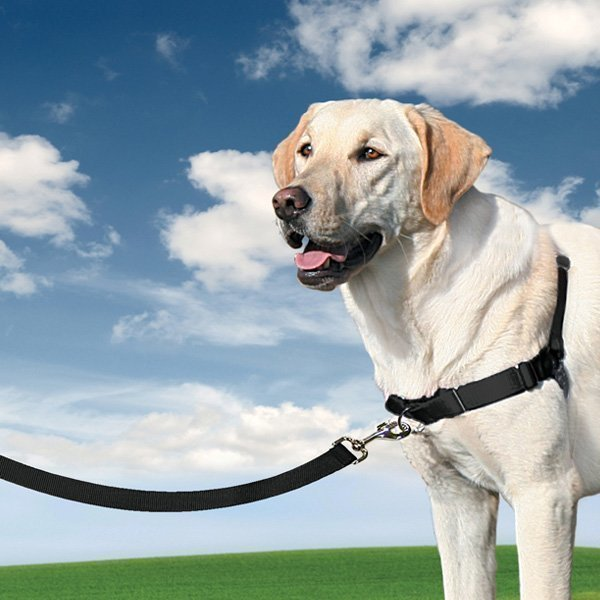 Petsafe Easywalk -vedonestovaljaat