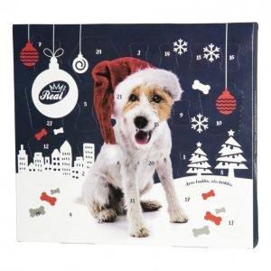 Real Dog Koiran Joulukalenteri 200 G