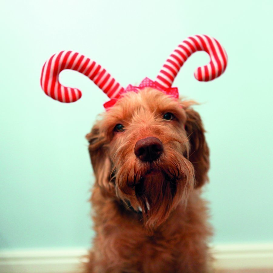 Rosewood Candy Cane Antlers S M