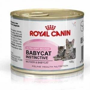 Royal Canin Babycat Instinctive Mousse 12x195 G
