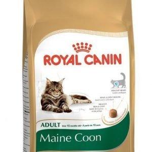 Royal Canin Feline Maine Coon 31 4 Kg