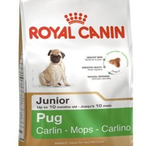 Royal Canin Mops Junior 1