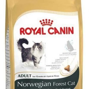 Royal Canin Norwegian Forest Cat 10 Kg