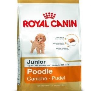 Royal Canin Pudel Junior 3kg