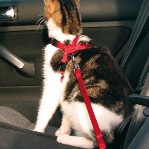 Trixie Autovaljaat Kissa Punainen 20 50 Cm