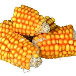 Trixie Natur Snack Maissintähkät Paloina 300 G