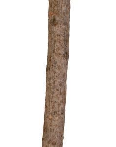 Trixie Orsi Natur Y Muoto 35 Cm